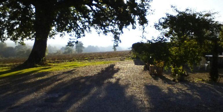 Oak Autumn mist